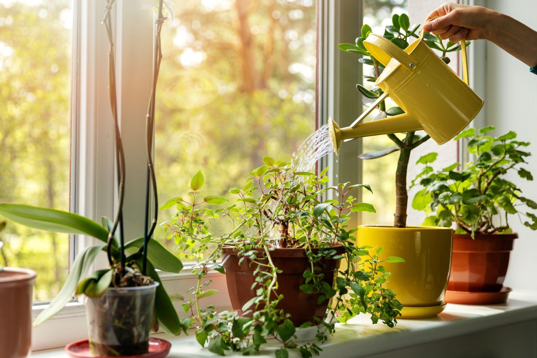 Tre gode råd til at holde planterne i live i din lejebolig