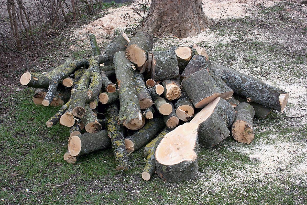 Træfældning – Sikkert og billigt med 3 tilbud